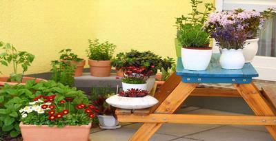 Taman Mini Di Rumah Mungil Cekinfo Tips